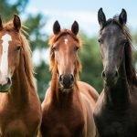 A Native British Horse Breeds Quiz