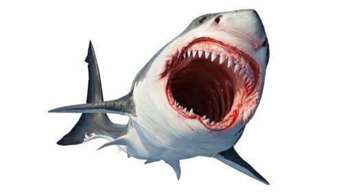 The Blockbuster Film Quiz: Jaws