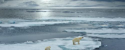 7 fun facts about polar bears