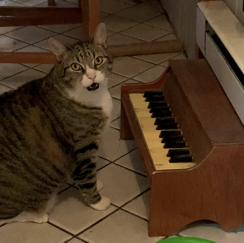 Cat Plays Piano When He Wants Attention Or Food